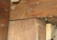 Pegged hand-hewed walnut beams in the Sutherland-Wilson house.